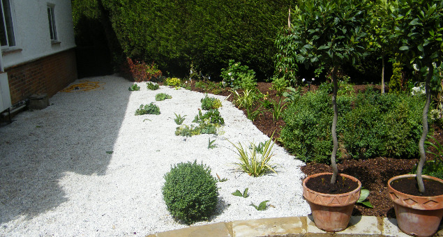 The unused, and very shady, area to the side of the house, and overlooked from the dining room, was brought to life with a selection of white flowering plants and white gravel, which will really stand out in low evening light. (A piece of statuary is yet to be selected to stand inside the box circle).