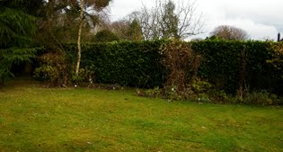 image of the garden before