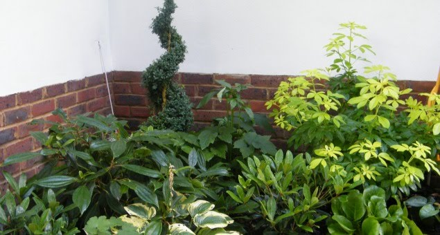 The shady corners were planted with different types of foliage plants