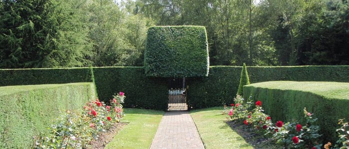 A professionally cut hedge at a garden in Sussex