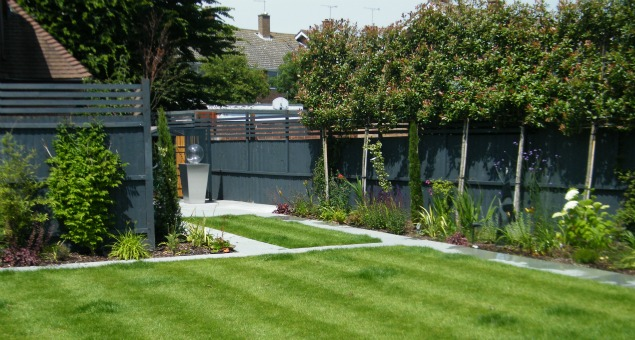 The rear garden with pleached trees to screen the houses behind