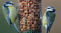 image of birds on a peanut feeder