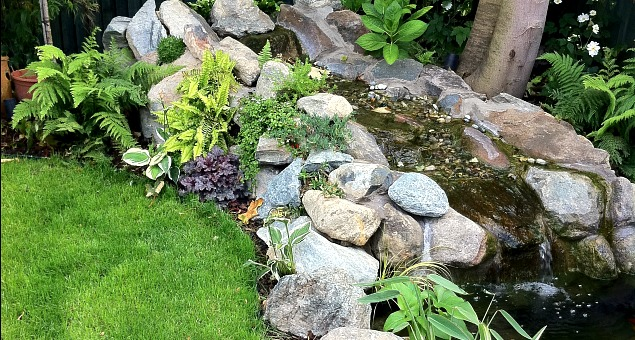 A natural-looking water course falls gently over and between smooth boulders and cobbles into a raised fish pond that can also be seen from the house. Planting will, in time, soften the stone, making it look as though it has always been there.