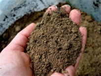 picture of sandy soil