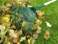 picture of lawn raking