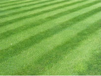 picture of stripy lawn