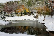 picture of pond in winter