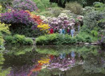 picture of rhododendron garden 2