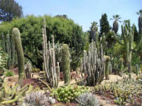 picture of Huntington Botanical Gardens