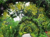 picture of Singapore Botanic Gardens