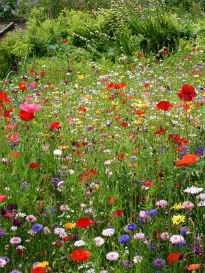 picture of meadow garden