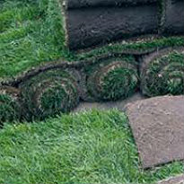 picture of meadow turf