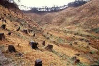 picture of deforestation in valley