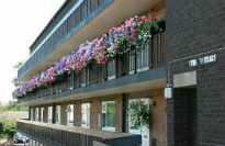 picture of verandah in bloom