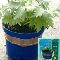 picture of copper band round plant pot