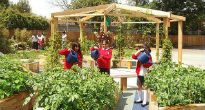 picture of outside classroom and veg beds at James Elliman school