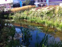 picture of Wetlands Walk