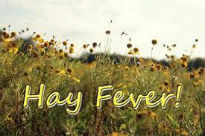 picture of hay fever poster