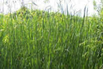 picture of grasses