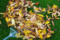 picture of leaves on the lawn