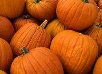 picture of Giant Pumpkins