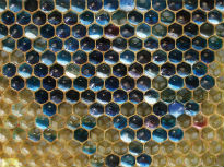 picture of coloured honeycomb