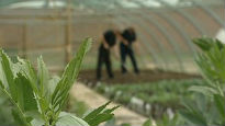 picture of prisoners gardening in greenhouse