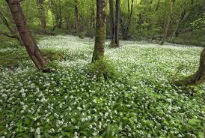 picture of forest floor at Borrowdale