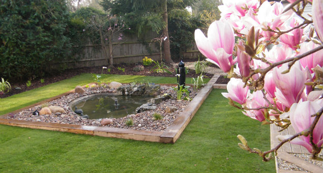 Another view of the pond through the magnolia