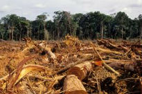 picture of deforestation machine