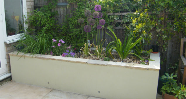 Raised bed nearest to the house with Aliums and Osteospermums in bloom