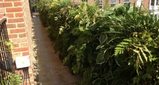 image of the living wall