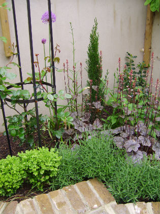 image of planting in the french courtyard