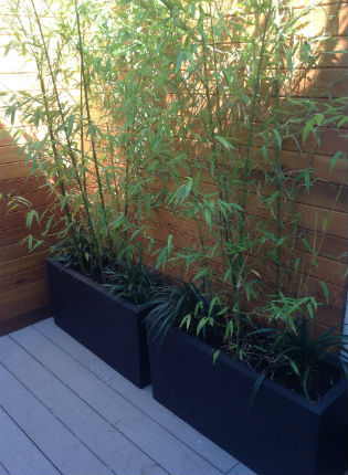image of bamboo in planters